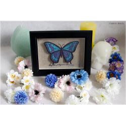 Cadre papillon bleu