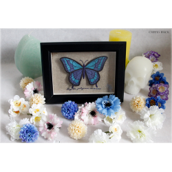 Frame with blue butterfly