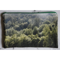 Lozere's forest - zipper pouch