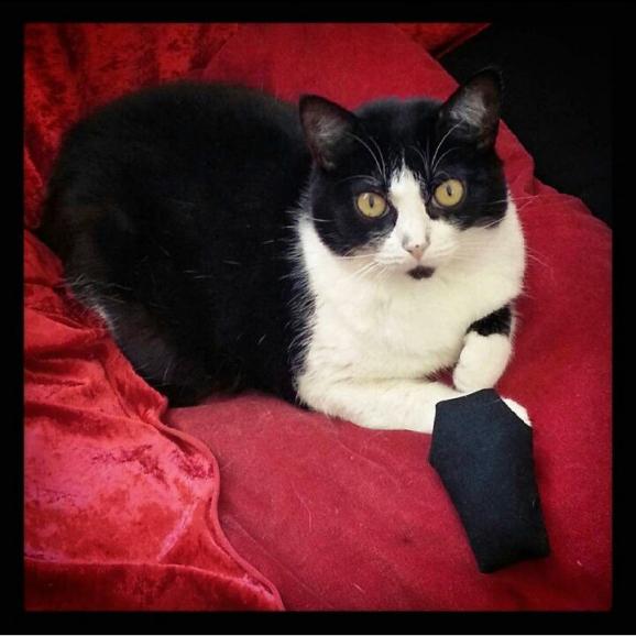Cercueil : jouet pour chat