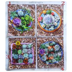 succulentes panneau : mouchoirs en coton : mouchoirs en coton